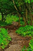 Into the Jungle - Watercolor