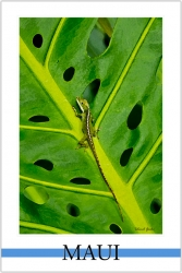 Island Gecko - Watercolor