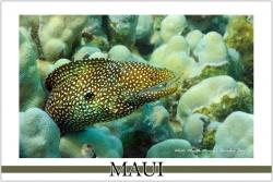 Moray Eel - Watercolor
