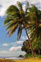 Olowalu Palms
