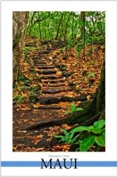 Stairway to Hana